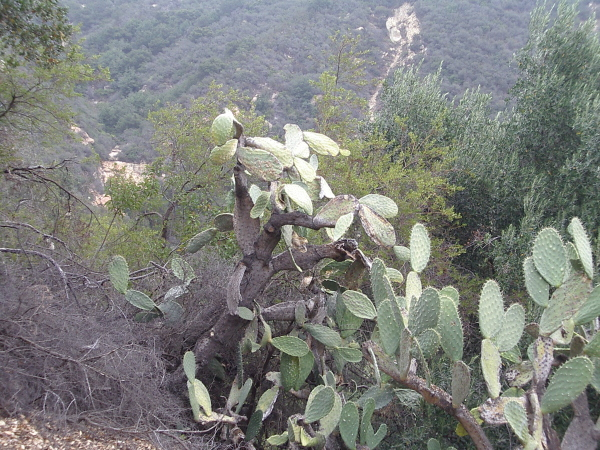 a cactus and a little bit of the view into the next canyon over