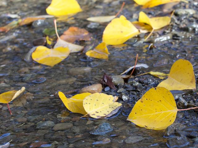 Fall Stevens Creek