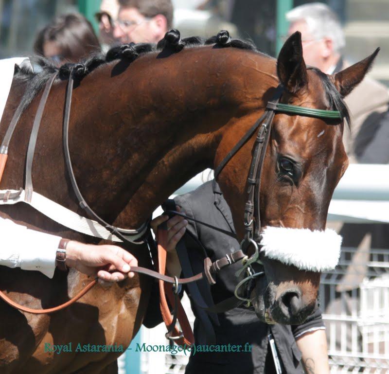 Photos Auteuil 17-05-2015 Journée du Grand Steeple IMG_0151