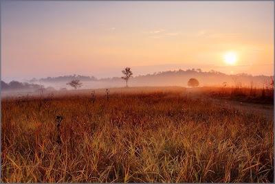Kamang Field