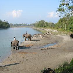 Chitwan National Park's profile photo