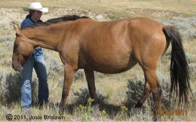 Wyoming Belle