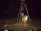Louisiana Trophy Buck