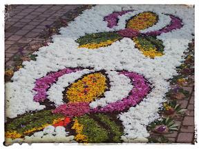 Zdjęcie przedstawia dywan z kwiatów ułożony w Boże Ciało w Spycimierzu