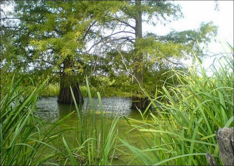 الحديقة الوطنية للقالة الجزائر