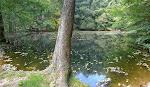 Burgweiher mitten im Wald.
