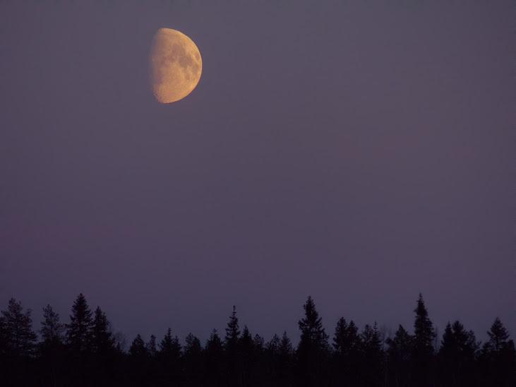 lune+niiles+traitee+089.JPG