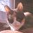 Holly A avatar image