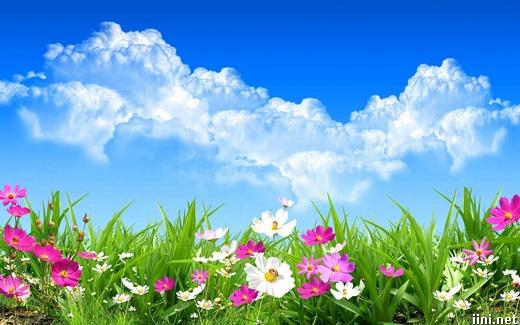 ảnh hoa cỏ mùa xuân dưới bầu trời xanh ngát