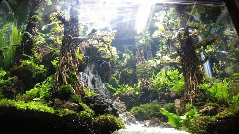 Vinh Aqua giới thiệu bộ sưu tập hồ thủy sinh suối thác