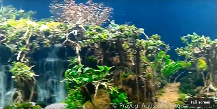 hồ thủy sinh suối thác rừng mini