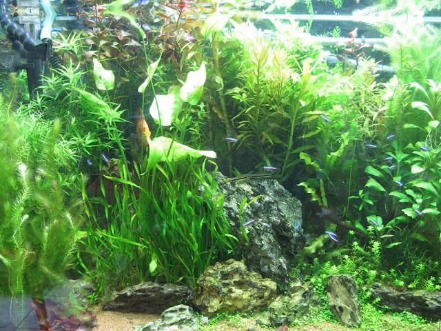 Amazonien 800 litres Aquarium-aquascaping-final13%252520%25255B1024x768%25255D