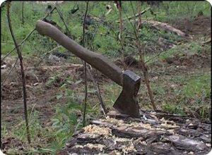 фото С виновных в незаконной рубке лесных насаждений прокурор требует взыскать причиненный ущерб