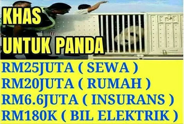 Perut Panda Lebih Bernilai Dari Perut Rakyat