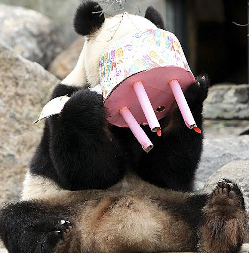 birthday+Adelaide_Panda_103.jpg