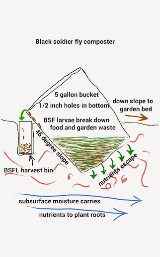 An Inground Bsf Composter Bsf Farming Forum Bsf Farming