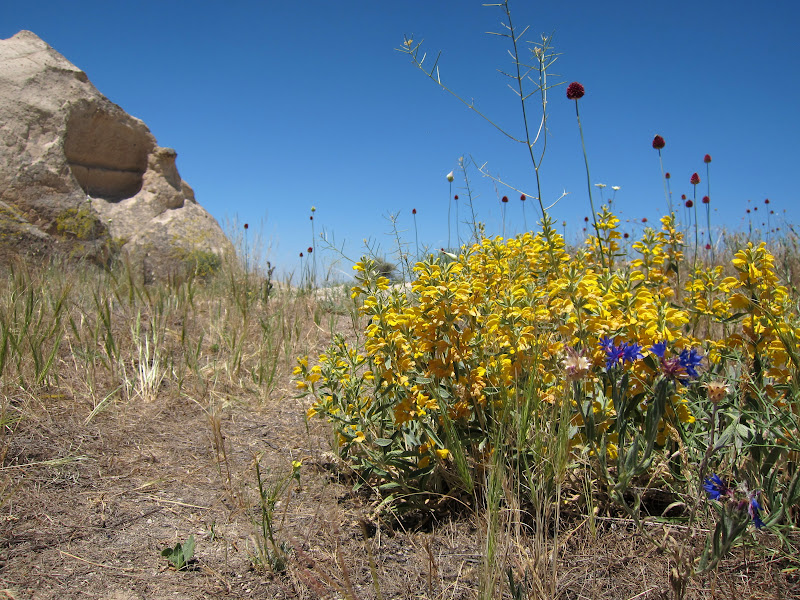 Wildflowers near Goreme