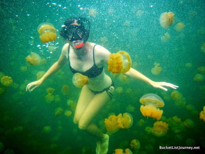 Lisa Niver, swimming with jellyfish in Palau. #StudyAbroadBecause Your Whole Life Will Change