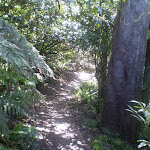 Prince Henry Cliff walk (9332)