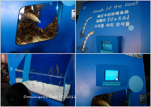 2012 06 235 Underwater World Singapore  A Review