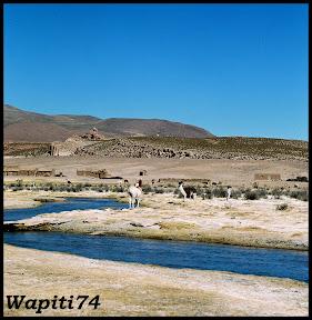 Un mois aux pays des Incas, lamas et condors (Pérou-Bolivie) - Page 3 CD3%2520%252855%2529