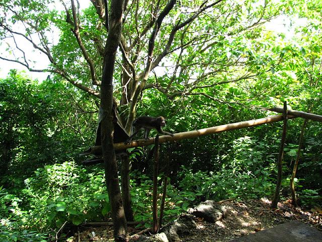 Из зимы в лето. Филиппины 2011 - Страница 5 IMG_0027%252520%2525285%252529