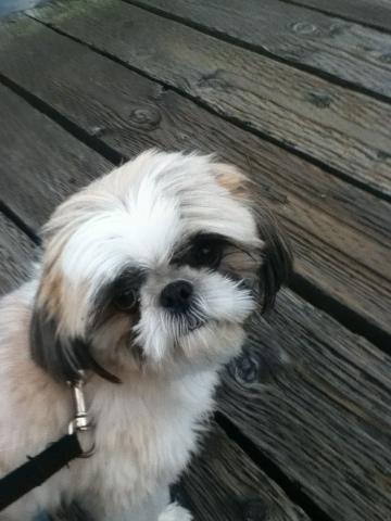 Zoey dog on a walk at marina