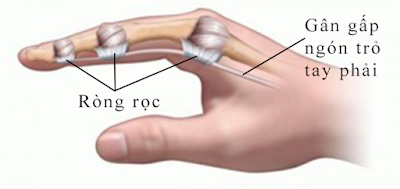 Hình 2: Hình minh hoạ ngón tay bình thường