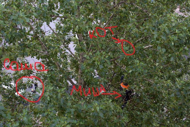 Кот на дереве Будапештская (вызов 614)  IMG_8517.CR2