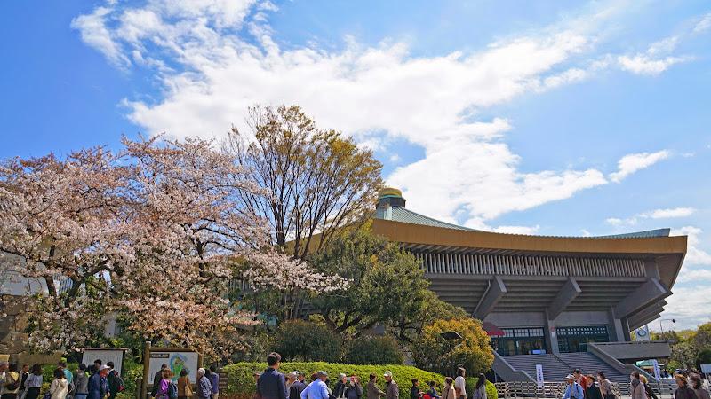 千鳥ヶ淵 桜 写真26