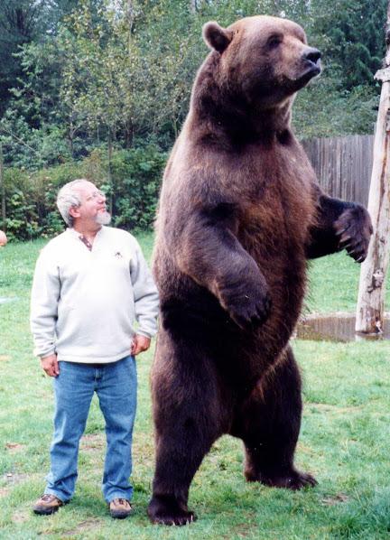 Urso pardo vs Urso polar - Página 2 Rob_koda_standing_crop_1