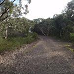 Along the Stringybark ridge management trail (153277)