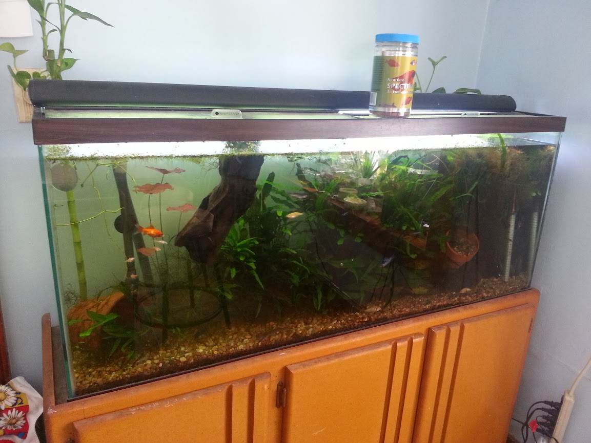 cure MTS or let it be? - The Planted Tank Forum