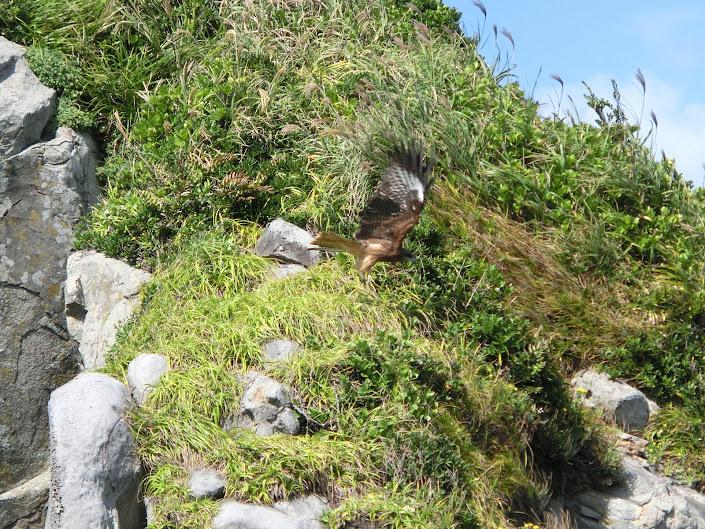 猿岩の鳶(とんび)