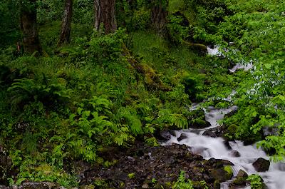wahkeena Cascade & forest