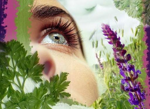 Травы для глаз