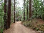 Camp Eastwood Trail