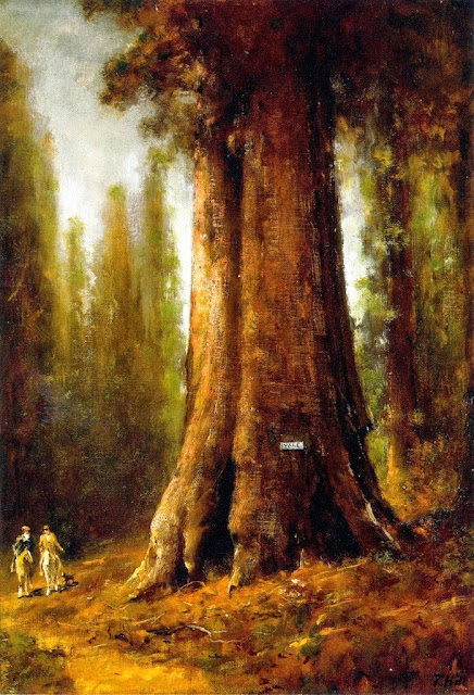 Thomas Hill - California Redwood Trees
