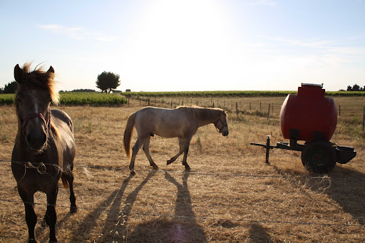 horses in the French countryside.jpg