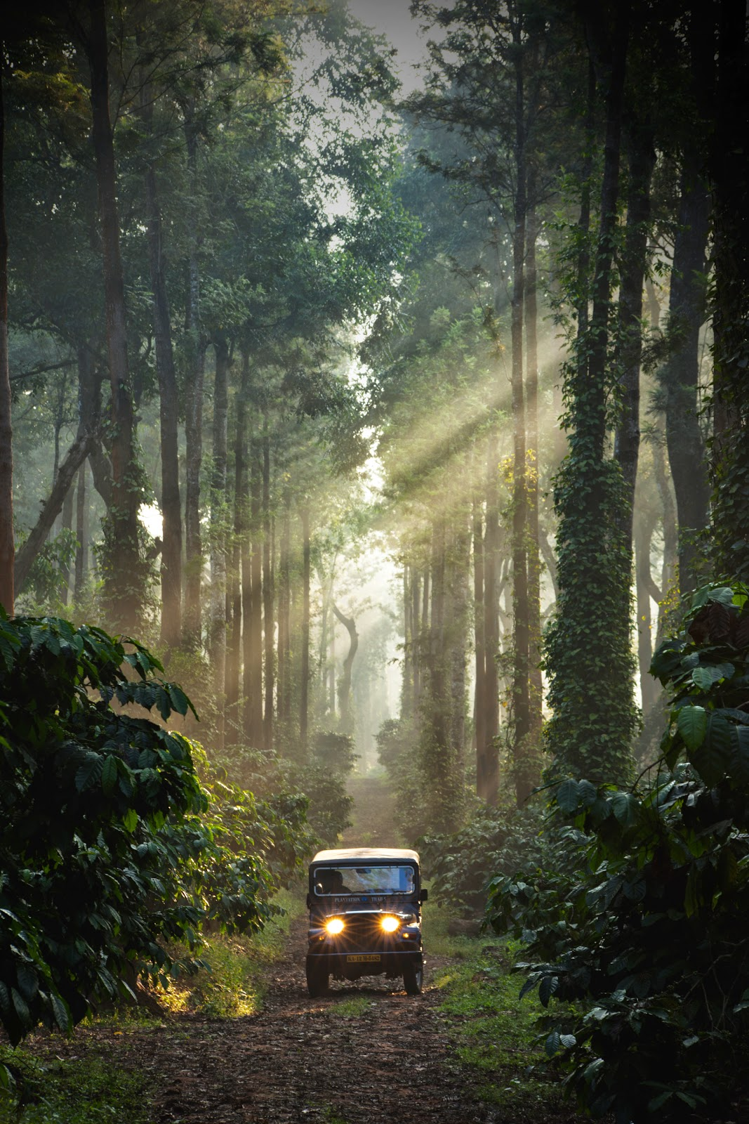 Discover Experiential Travel in Coorg with Plantation Trails - Be On ...