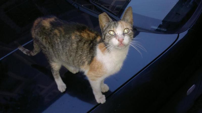 Esperanza Felina y los Gatos callejeros 25052011031%25255B1%25255D