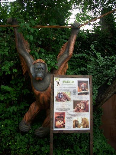 Orangutan - całkiem, całkiem...
