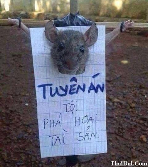 Thơ vui xử án chuột đồng