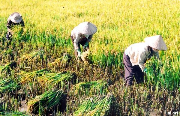 Thơ viết về Nghề Nông hay, chùm thơ ca ngợi người nông dân cần cù