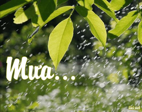 Thơ mưa 5 chữ