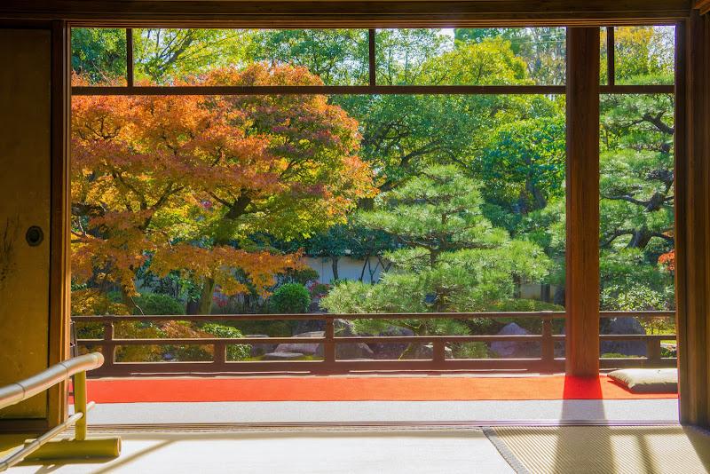 京都 紅葉 正伝永源院 写真2
