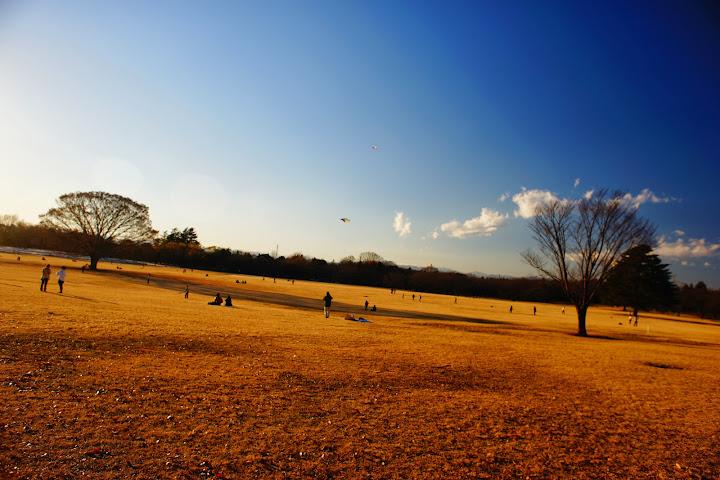 showa kinen park tokyo