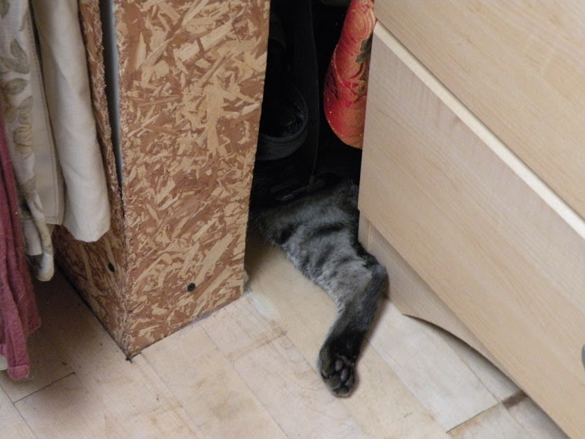 Ozzy cleverly hidden between a random wall and my dresser.