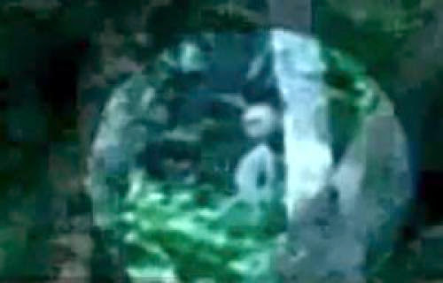 Alien Caught On Film In Brazil Rainforest October 2011 Ufo Sighting News