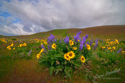 Dalles Mountain bouquet